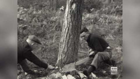 FORET DE BORD - BUCHERONNAGE - 1946/48