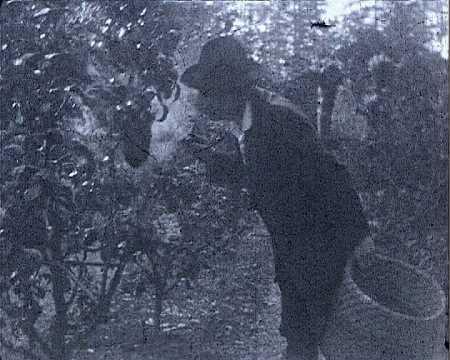 M. HURPIN CUEILLE UN ESSAIM (36)